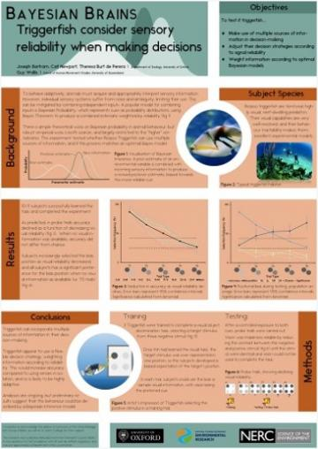 Research Poster 'Bayesian Brains: Triggerfish...'